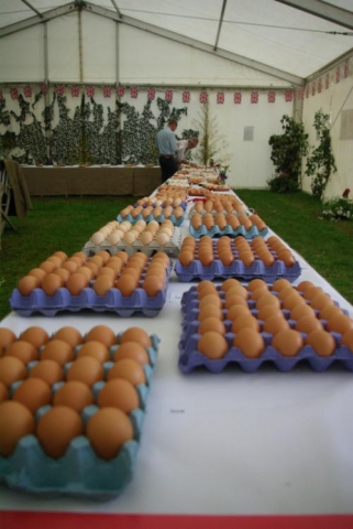 SUNDAY OPEN EGG SHOW